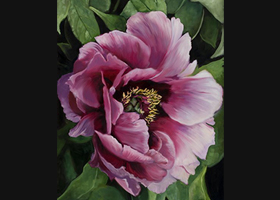 Victor Blakey -- Pink Passion Peony